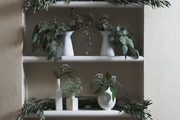 Vases holding greenery on white shelves.