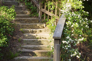 A backyard staircase adorned with white flowers and plants in Malibu, California