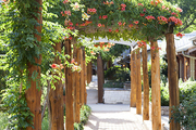 A canopy of flowering trumpet vines over a gravel walkway