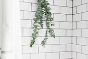 A bundle of eucalyptus in a shower.