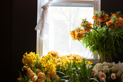 Bunches of tulips and daffodils in front of a window.