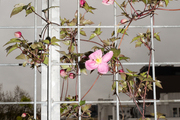 A detail of a floral vine on a window.