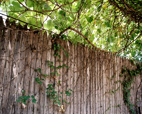 Wooden Fence Photos (1 of 1) []