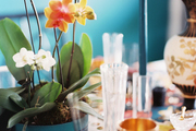 A festive table set with potted orchids, a mixture of glassware, and blue taper candles