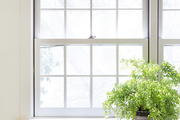 A fern under a double-hung window