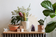 A detail of plants on a shelf.