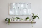 A detail of plants on a shelf below a neon sign.