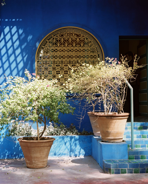 Majorelle Garden Photos (1 of 10)