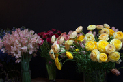 Vases of yellow ranunculus and pink sweat peas in a floral studio.