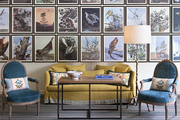 A gallery wall depicting birds and wildlife in a plush sitting room