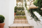 Steps leading to a grouping of potted paperwhites and boxwoods