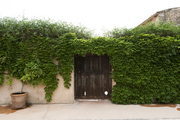 A wooden door surrounded by ivy on a Mediterranean estate