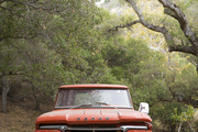 A Dodge pickup truck under a knotted tree