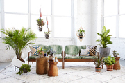 An airy corner featuring a few of spring's best planters and plants by Costa Farms at Patina in Brooklyn, New York