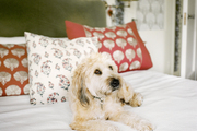 A dog rests on white bedding beside patterned pillows and a green velvet headboard