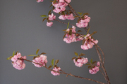 Cherry blossoms against a gray navy wall