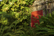 An illuminated red door partially hidden by tropical foliage