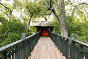 A tree covered walkway