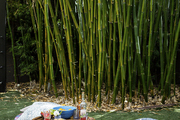 A stand of bamboo sheltering a picnic setup with kantha quilts and patterned pillows