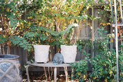 Potted plants and outdoor furniture in a courtyard