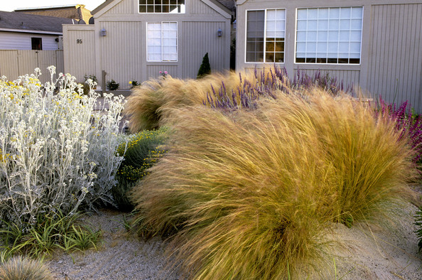 Dry garden photos design ideas remodel and decor lonny for Dry garden designs