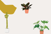 Which Plant Are You Based On Your Personality