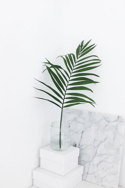 A Single Palm Leaf