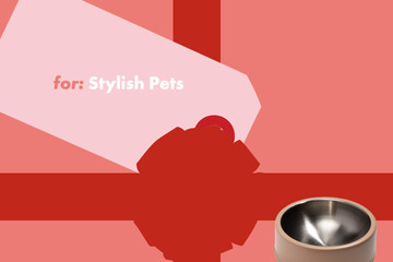 Day 7: For Stylish Pets