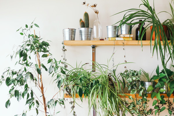 Horticulture Will Help Take Care Of Your Plants