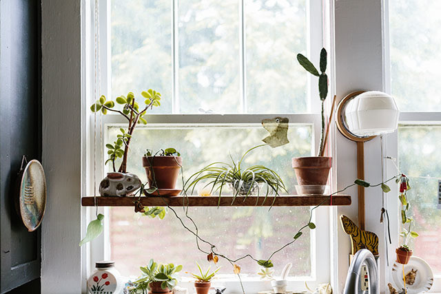 In Defense Of Year Round Succulents