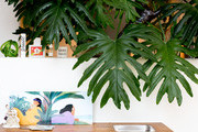 Plant Delivery Services To Breathe Life Into Your Space