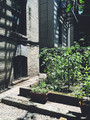 Easy Small-Space Vegetable Gardening Tips to Use Anywhere