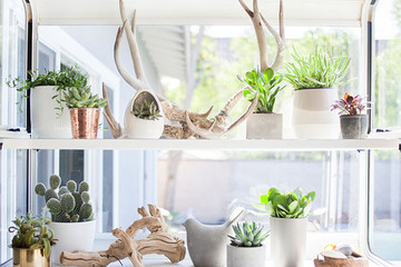 Spruce Up Your Windowsills For The Season