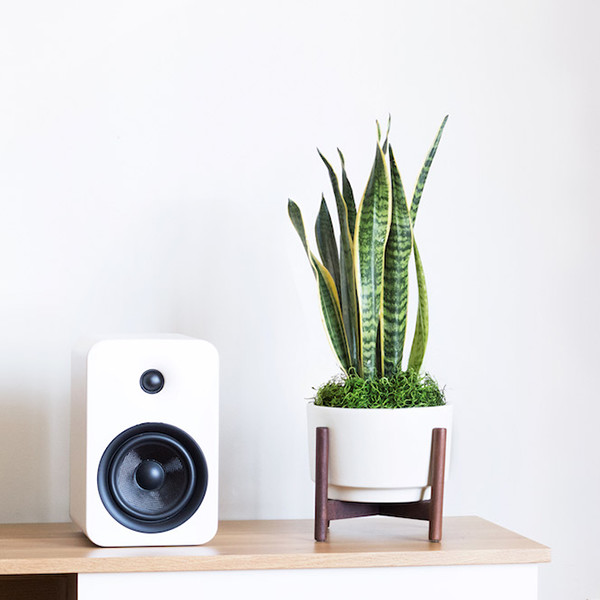 10 Houseplants You Are (Almost) Guaranteed To Not Kill
