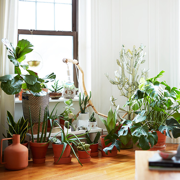 15 Times Plants (Yes, Plants) Stole The Show In Home Tours