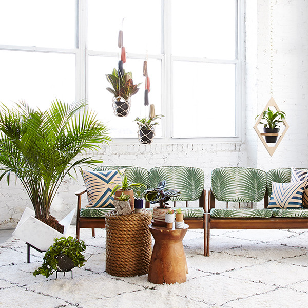 15 Unique Ways To Decorate With Houseplants