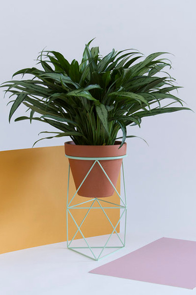 More Plant Products